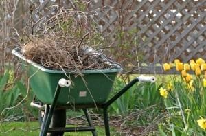 spring_yard_cleanup_1-499x330